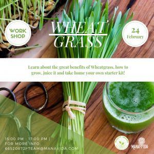 Mighty Greens – Wheatgrass February Workshop